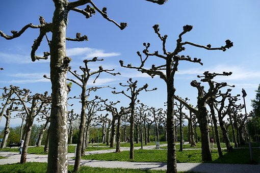 Ce qu'il faut savoir sur l'émondage d'un arbre