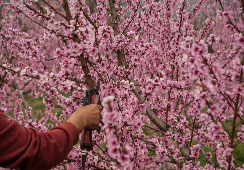 Quelques conseils pour la taille de vos arbres fruitiers