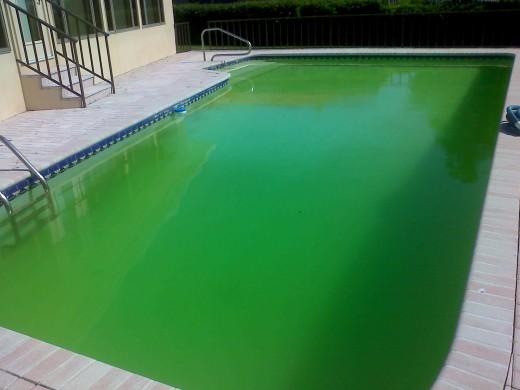 L'essentiel à savoir pour nettoyer efficacement sa piscine