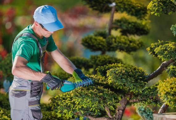 Tout ce qu'il faut savoir pour maintenir les arbres en bonne santé