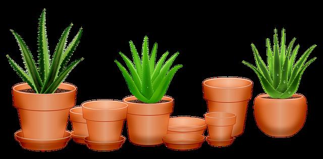 Quelle plante mettre à l'intérieur de la maison?