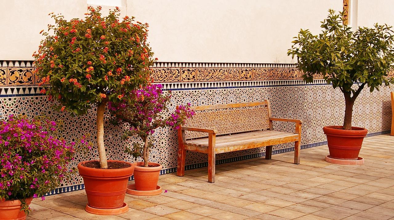 Les plantes méditerranéennes pour terrasse