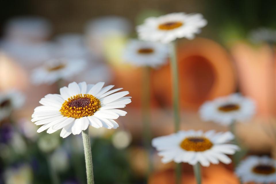 Tout sur l'entretien de jardin