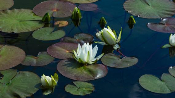 Le bassin de jardin : un ouvrage décoratif