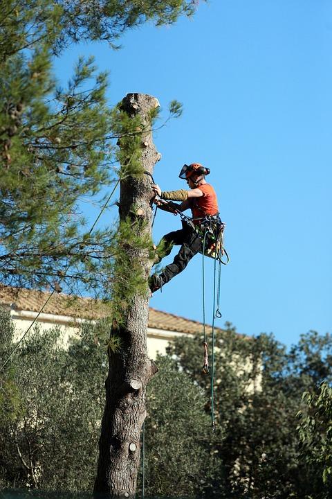 Zoom sur le métier d'élagueur-grimpeur