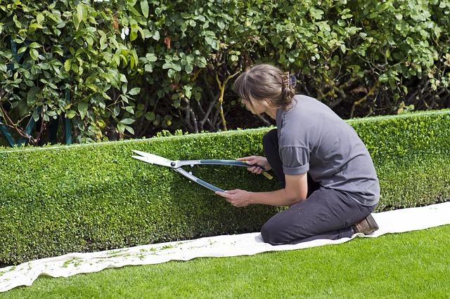 Conseils pour trouver un paysagiste qualifié