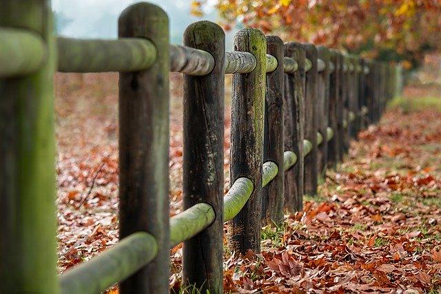 Quelles sont les meilleures essences de bois pour une clôture?