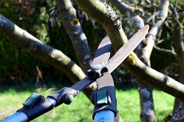 Les travaux d'élagage et d'abattage d'arbres