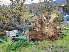 L'essouchage d'arbre: comment ça marche?