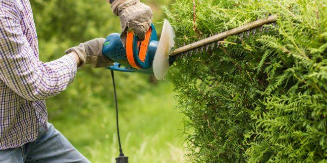 Débroussaillage: essentiel pour un jardin propre!