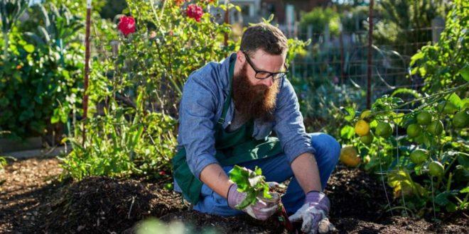 7 astuces efficaces pour éloigner les nuisibles de votre potager