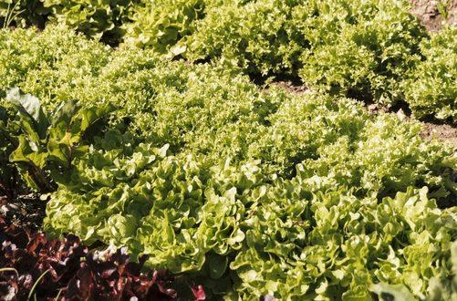 Comment créer un jardin authentique et écologique?