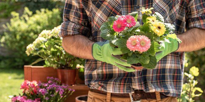 Quelles fleurs installer dans votre jardin ?