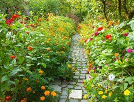 Comment bien s'occuper des fleurs de votre jardin en été ?