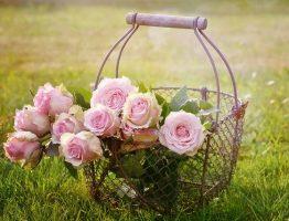 9 conseils pour entretenir soi-même son jardin