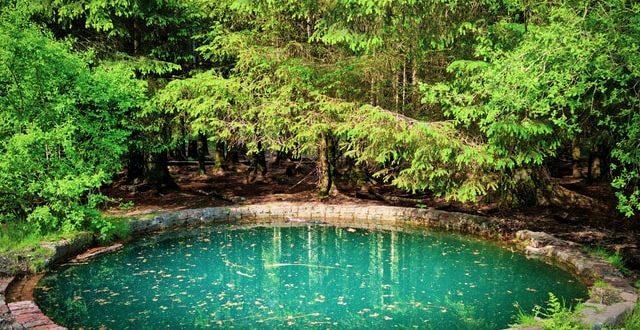 L'essentiel à savoir sur la piscine naturelle
