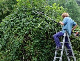 Tailler et élaguer ses arbres : Comment y procéder ?