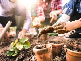 Astuces et conseils pour bien préparer son projet de jardin