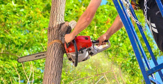 Bien choisir sa tronçonneuse électrique pour prendre son de son jardin